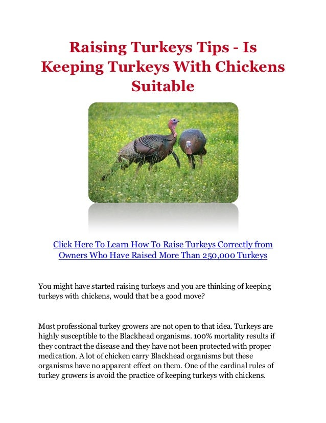 weekly guide to raising chickens