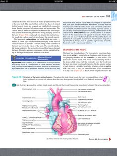 priciples of anatomy study guide