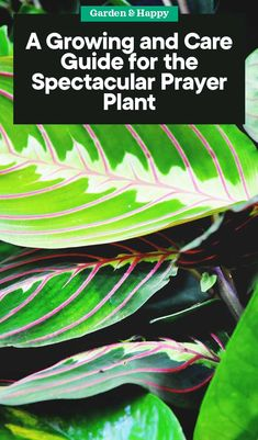 complete guide to plants and flowers