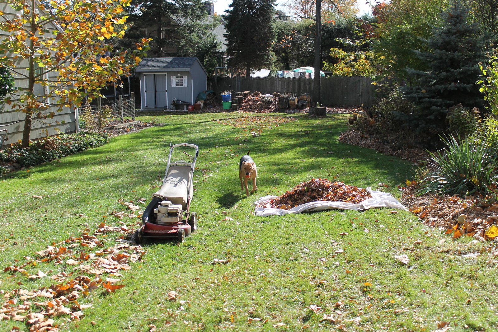 lawn care guide for those with pets